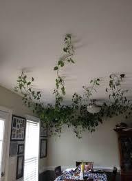 fake plants decor