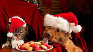 cute animal christmas backgrounds. Simple Animal Christmas Cat And Dog Wallpaper On Cute Animal Backgrounds S