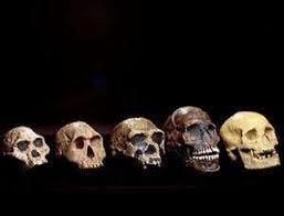 Timeline Human Evolution New Scientist