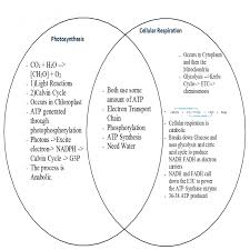 Venn Diagram Photosynthesis And Cellular Respiration Cellular Respiration Vs Photosynthesis Venn Diagram Demire