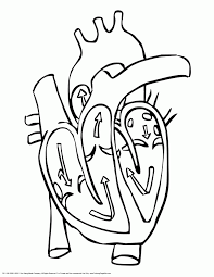 Small Picture Human Heart Diagram ColoringHeartPrintable Coloring Pages Free