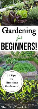 gardening for beginners 11 tips for beginning gardeners get ready to grow your best