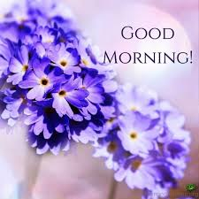 Beautiful Good Morning Images With Flowers