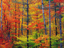 images of fall colors