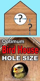 Sparrow Birdhouse Hole Size Chart Bird House Hole Size Best Dimensions