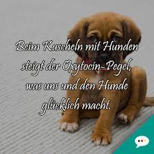 Whatsapp Spruchbilder Deutsche Sprüche Xxl