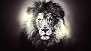lions wallpaper called lion