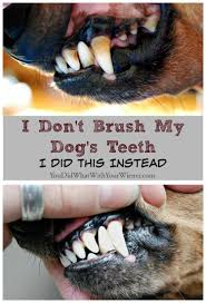 disclaimer a thorough dental cleaning under anesthesia and brushing your dog s teeth is considered the gold standard by veterinarians for maintaining