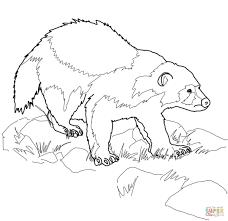 Printable Coloring Page Wolverine Animal Coloring Page Free Printable Coloring Pages 16