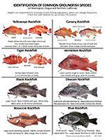 California Rockfish Chart Odfw Marine Resources Rockfish Recompression Know Your Fish