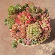 多肉 植物 ブログ