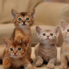kitten wallpaper hd wallpapers of kittens amazon co uk app for android