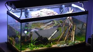 Freshwater Fish Tank Temperature Chart Aquarium Thermometer Pros And Cons