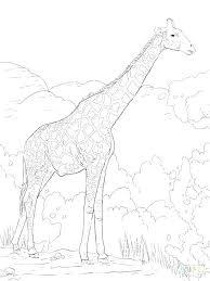 Giraffe Printable Template Animal Giraffe Print Template Border Zebra Pumpedsocial