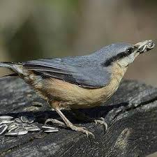un oiseau Martin 06 Novembre trouvé par Martine Images?q=tbn:ANd9GcRw_Jh4Q9Z7ckSxPcEbm2wyPHIxKlYT19cikh0kzCOw196AJ1w&s