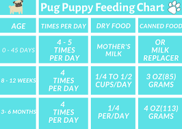 Purina Puppy Feeding Chart 5 Best Quality Food For Pug Puppies Available In Market