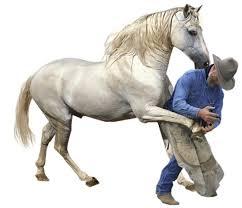 """Résultat de recherche d'images pour """"chevaux animés"""""""
