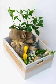 customized gift box for diy l that you can make and give as a gift subsute the lemon tree in this l grouping for a mint plant for a mojito
