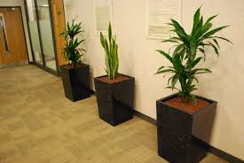 office flower pots. Office Plant Displays Made From Recycled Cd S And Cases Flower Pots