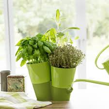 Accessories: Indoor Smart Herb Planter - Indoor Plants