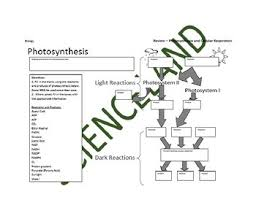Biology Bundle Photosynthesis And Cellular Respiration Flow Charts