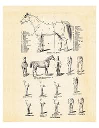 Vintage Horse Print Horse Anatomy And Parts Chart