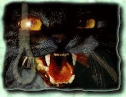 the poe decoder the black cat  black cat illustration
