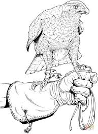 Small Picture Hunting falcon coloring page Free Printable Coloring Pages