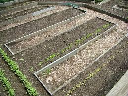 raised bed gardens soil raised beds garden soil vegetables dream teams garden landscapes raised bed garden