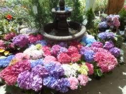 fred meyer garden center.  Fred Fred Meyer Garden Center In Seattle WA  By PatricksMercy Intended L