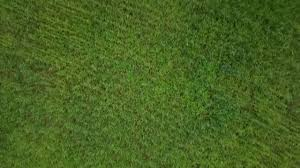 grass field aerial.  Aerial Aerial Shot Of Grass Field Stock Video Throughout Field F