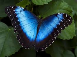 real beautiful colorful butterflies.  Real The Breathtaking Colors Of Most Beautiful Butterflies 17 Pictures 1 For Real Beautiful Colorful Butterflies T