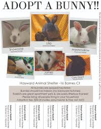 posters and flyers from hrs and our partners house rabbit society sample adoption flyer