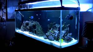 Saltwater Aquarium Lighting Guide Fowlr Tank Setup And Maintenance Guide The Aquarium Guide