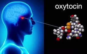 Oxytocin, The 'Love Hormone' Also Plays Critical Role In Stress And Gastroenterological Problems According To New Study - Thailand Medical News