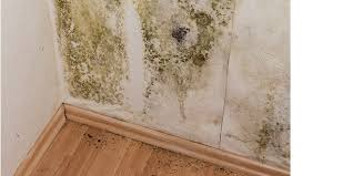 Living In A Damp Or Moldy House Can Create Sleeping Problems U2013 Liver Doctor
