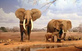 Elephant Wallpapers HD Pictures ...
