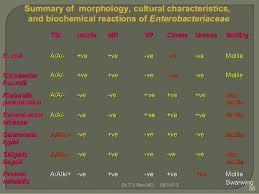 Enterobacteriaceae Biochemical Reactions Chart Enterobacteriaceae Identification