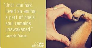 Love Animals Quotes Interesting 48 Pet Quotes That Prove Our Love For Animals