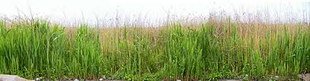Tall Grass Texture Background Images Pictures
