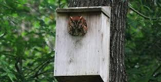 owls of houston