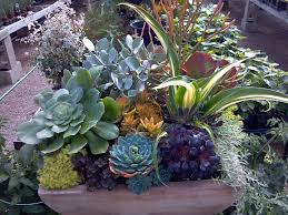 26 Best Container Gardening Full Sun Images On Pinterest Container Garden Ideas Full Sun