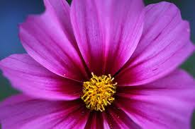 Image result for flowers nature