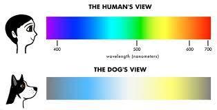 Que voit mon chien à la télévision ? - Toutouandyou