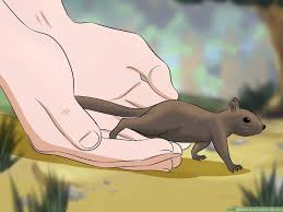 How To Raise A Baby Squirrel With Pictures Wikihow
