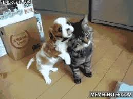 dog and cat friends gif. Contemporary And Friends GIF And Dog Cat Gif