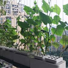 smart herb garden kit hydroponic growing high end desk garden plants flower hydroponics grow for