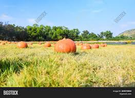 Pumpkin That Powerpoint Template Pumpkin That Powerpoint Background