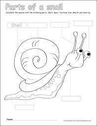 19bd9f99ca0b73d08df656589438fcea label and color the parts of the snail activity for preschoolers on worksheets parts of the body for kindergarten
