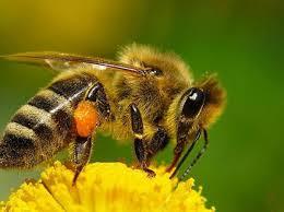 Контрольная работа Удивительная жизнь пчёл класс УМК Гармония hello html m397c4dfa jpg hello html 17a7a266 jpg